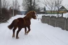 зима3 (2)